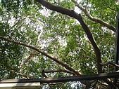 台南二日遊~古蹟篇:DSC04587樹屋內.jpg