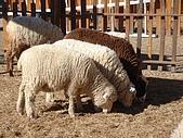 清境農場:DSC00014.jpg