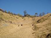 清境農場:DSC09970.jpg