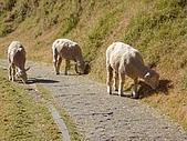 清境農場:DSC09972.jpg