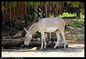 2017-08-13 動物園排毒去:2017-08-13 動物園038.JPG