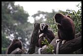 2015-01-17 動物園慢遊:2015-01-17 動物園慢遊(成成)088.JPG