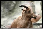 2015-11-01 台北動物園:2015-11-01 動物園038.JPG