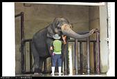 2017-08-13 動物園排毒去:2017-08-13 動物園018.JPG