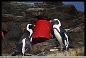 2015-11-01 台北動物園:2015-11-01 動物園055.JPG