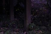2014-04-19 螢火蟲初體驗-和美山:2014-04-19 螢火蟲-碧潭045.JPG
