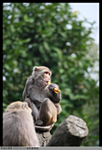 2015-01-17 動物園慢遊:2015-01-17 動物園慢遊(成成)049.JPG
