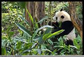 2016-03-06 動物園寫真:2016-03-06 動物園寫真018.JPG