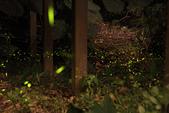 2014-04-19 螢火蟲初體驗-和美山:2014-04-19 螢火蟲-碧潭078.JPG