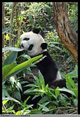 2016-03-06 動物園寫真:2016-03-06 動物園寫真022.JPG