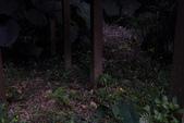 2014-04-19 螢火蟲初體驗-和美山:2014-04-19 螢火蟲-碧潭046.JPG