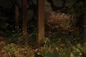 2014-04-19 螢火蟲初體驗-和美山:2014-04-19 螢火蟲-碧潭079.JPG