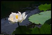 2020-06-06 碧山嚴&白石湖:2020-06-06  碧山嚴&白石湖008.JPG