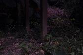 2014-04-19 螢火蟲初體驗-和美山:2014-04-19 螢火蟲-碧潭048.JPG
