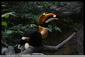 2015-01-17 動物園慢遊:2015-01-17 動物園慢遊(成成)105.JPG