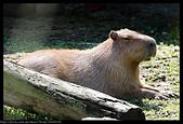 2020-03-15 動物園趴趴走:2020-03-15 動物園一日遊020.JPG