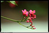 2015-11-01 台北動物園:2015-11-01 動物園011.JPG