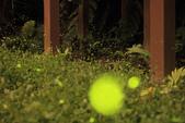 2014-04-19 螢火蟲初體驗-和美山:2014-04-19 螢火蟲-碧潭082.JPG