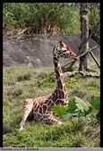 2016-03-06 動物園寫真:2016-03-06 動物園寫真061.JPG
