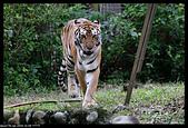 2019-12-09 動物園習拍:2019-12-09 動物園半日遊033.JPG
