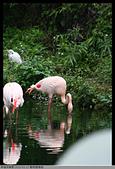 2015-01-17 動物園慢遊:2015-01-17 動物園慢遊(成成)003.JPG