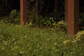 2014-04-19 螢火蟲初體驗-和美山:2014-04-19 螢火蟲-碧潭083.JPG