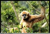 2016-03-06 動物園寫真:2016-03-06 動物園寫真035.JPG