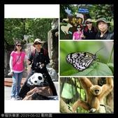 2019-06-02 動物園:相簿封面