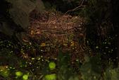 2014-04-19 螢火蟲初體驗-和美山:2014-04-19 螢火蟲-碧潭088.JPG