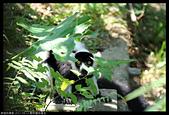 2017-08-13 動物園排毒去:2017-08-13 動物園042.JPG