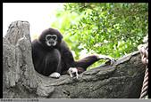 2015-11-01 台北動物園:2015-11-01 動物園001.JPG