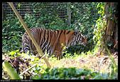2017-08-13 動物園排毒去:2017-08-13 動物園027.JPG