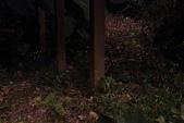 2014-04-19 螢火蟲初體驗-和美山:2014-04-19 螢火蟲-碧潭051.JPG