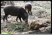 2015-01-17 動物園慢遊:2015-01-17 動物園慢遊(成成)022.JPG