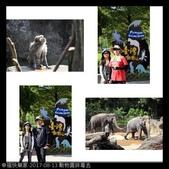 2017-08-13 動物園排毒去:相簿封面