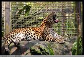 2016-03-06 動物園寫真:2016-03-06 動物園寫真045.JPG