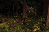 2014-04-19 螢火蟲初體驗-和美山:2014-04-19 螢火蟲-碧潭055.JPG