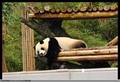 2015-11-01 台北動物園:2015-11-01 動物園006.JPG