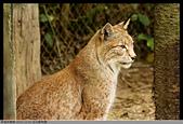 2015-11-01 台北動物園:2015-11-01 動物園047.JPG