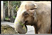 2016-03-06 動物園寫真:2016-03-06 動物園寫真050.JPG