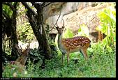 2017-08-13 動物園排毒去:2017-08-13 動物園007.JPG