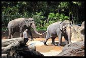 2017-08-13 動物園排毒去:2017-08-13 動物園022.JPG