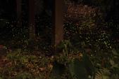 2014-04-19 螢火蟲初體驗-和美山:2014-04-19 螢火蟲-碧潭058.JPG