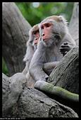 2019-12-09 動物園習拍:2019-12-09 動物園半日遊022.JPG