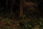 2014-04-19 螢火蟲初體驗-和美山:2014-04-19 螢火蟲-碧潭059.JPG