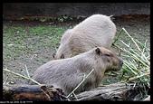 2019-12-09 動物園習拍:2019-12-09 動物園半日遊029.JPG