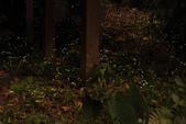 2014-04-19 螢火蟲初體驗-和美山:2014-04-19 螢火蟲-碧潭060.JPG