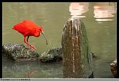 2016-03-06 動物園寫真:2016-03-06 動物園寫真066.JPG