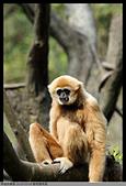2016-03-06 動物園寫真:2016-03-06 動物園寫真031.JPG