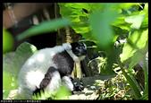 2017-08-13 動物園排毒去:2017-08-13 動物園043.JPG